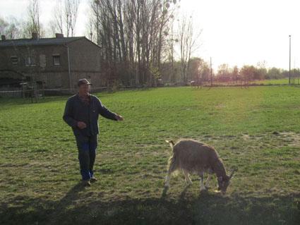 Molly, die Ziege aus Mildenberg